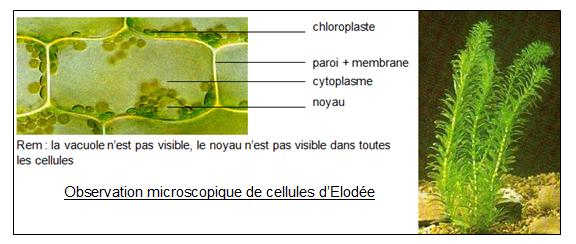 image Cellules_Elode.png (0.1MB)