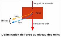 image liminationdelure300x186.png (35.4kB)